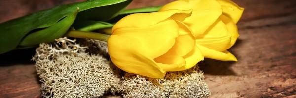 tulips-706031_960_720