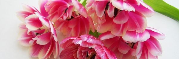 kwiaty_1